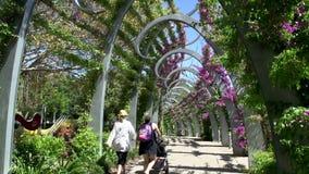 Inclinazione da passeggiata alla gente che cammina nei parchi del sud della Banca a Brisbane archivi video