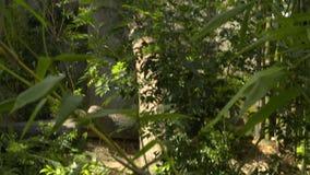 Inclinazione da una forcella in un albero ai piccoli risparmi stock footage