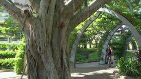 Inclinazione dall'albero alla gente che cammina nei parchi del sud della Banca a Brisbane stock footage