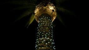 Inclinazione della palma stock footage
