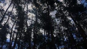 Inclinazione sui tronchi e sui rami di albero profilati su un cielo blu con la luce del sole che irradia da parte a parte archivi video