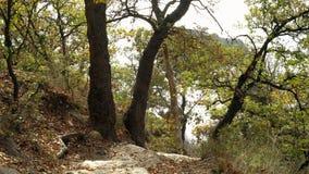 Incline acima do tiro de escadas de pedra feitas ancião no monte da montanha que dirige para baixo O trajeto estreito corre em in video estoque