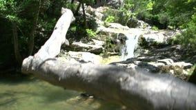Incline de árbol a la cascada en Maries, Thassos Grecia almacen de metraje de vídeo