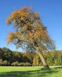 Incline tree Royalty Free Stock Photo
