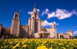 Incline y desplace la vista de dientes de león amarillos soleados de la universidad de Moscú en primavera fotografía de archivo libre de regalías