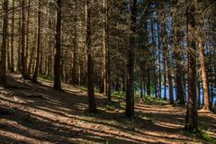 Inclined forest to the lake stock photo