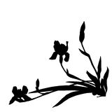 Inclined irises silhouettes. Irises silhouettes, illustration isolated on white Stock Photos