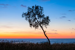 Inclined ree at sunset Royalty Free Stock Image