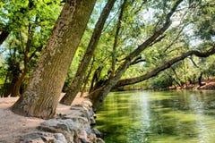 Inclined trees near lake Stock Photo