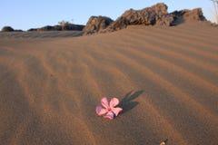 Incluso en el desierto bajo el sol abrasador está la vida Fotografía de archivo