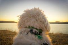 Incluso puestas del sol del amor de los perros Imagenes de archivo