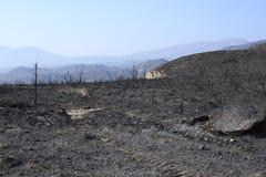 Incêndio florestal Fotos de Stock