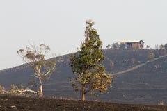 Incêndios Tasmânia 2013 de Bush Imagens de Stock