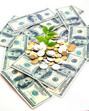 Incomes. Coins and plant, isolated on white background royalty free stock photo