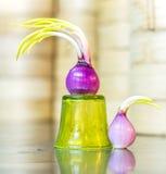 Incoming season spanish onion spring Stock Image