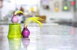 Incoming season spanish onion spring Royalty Free Stock Images