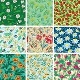 Inconsútil floral Fotos de archivo