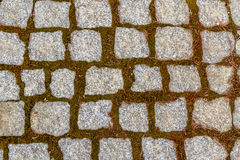 Inconsútil tejar textura cobbled del camino Foto de archivo