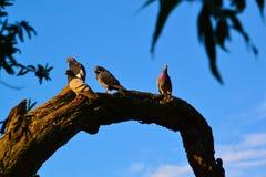 Incontrando i piccioni Fotografie Stock Libere da Diritti