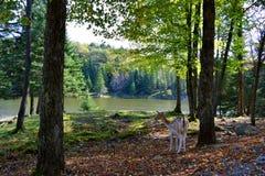 Incontrando una natura selvaggia sull'orlo del lago fotografie stock libere da diritti