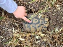 Incontrando una tartaruga fotografia stock