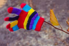 Incontri l'autunno luminoso! Fotografie Stock