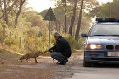 Incontro speciale fra l'essere umano e gli animali selvatici Fotografie Stock
