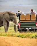 Incontro vicino con un elefante africano sul safari in Africa Fotografie Stock Libere da Diritti
