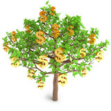 Increase in profits. The tree is growing dollar, on a white background, 3d render Royalty Free Stock Photo