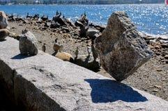 Incredibl rock balancing, Vancouver, Canada Royalty Free Stock Photo
