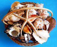 Basket of shells and conches stock images