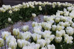 Incredible beautiful flowerbed royalty free stock photography