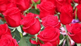 Incredible bunch of lots of red roses in tribute to women and to Stock Image