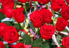 Incredible bunch of lots of red roses in tribute to women and to Stock Photos