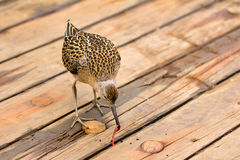 Incredible difficulties for migrants: weary bird Stock Image
