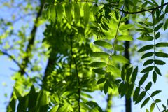 Incredible green leaf foliage Royalty Free Stock Photography