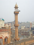 Eagle take it easy on a rooftop in Old Delhi, India stock image