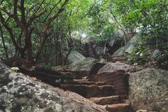 Walking up the Pidurangala Rock. Beautiful Stairway leading through a forest. stock photo