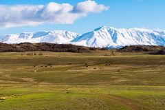 Incredible landscape of the steppe area with lakes and trees smoothly turning into mountains with snow-capped peaks. Mountains Of Altai Stock Image