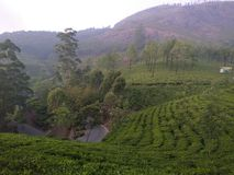 KERALA TOURISM TEA ESTATE WAGAMON MUNNAR IDUKKI royalty free stock photos
