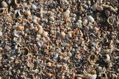 Incredible Tiny Shell Beach Royalty Free Stock Photos