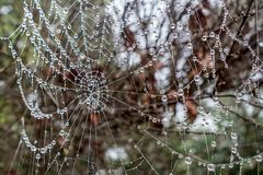 The web is decorated with drops of morning dew. Elegant cobweb dreams to fly to the sky once with a fair wind. stock image