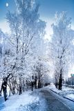 Incredible view of snowy trees in a winter frosty day. Clear sky and moon royalty free stock photo