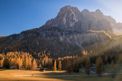Incredible view of yellow larches illuminated by the rising sun. Alta Badia, Dolomite Alps, Italy. Incredible view of yellow larches illuminated by the rising Royalty Free Stock Photos