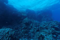Incredible visibility on the reef - Red Sea Stock Images