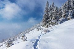 Incredible winter mountains landscape. Incredible winter landscape, trees in the hoar frost at cloudy frosty morning, fairy tale scenery, amazing nature royalty free stock photography