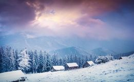 Incredible winter sunrise in Carpathian village snow covered fir Stock Photos