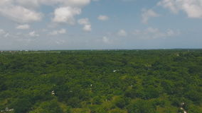 Incredibly beautiful and splendid green forests. In the daytime stock video