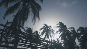 Incredibly beautiful and tall palm trees. In the daytime stock video footage