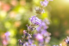 Incredibly färgrik blomma Arkivfoton